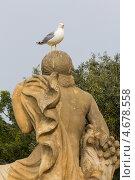 Испания, Барселона, чайка, сидящая на уличной каменной скульптуре (2013 год). Стоковое фото, фотограф Дарья Родоманова (Проскурина) / Фотобанк Лори