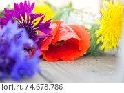 Полевые цветы. Стоковое фото, фотограф Людмила Дмитрук / Фотобанк Лори