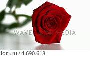 Купить «Red rose falling and boucing», видеоролик № 4690618, снято 22 июля 2018 г. (c) Wavebreak Media / Фотобанк Лори
