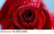 Купить «Close up of the raindrop dripping on a red rose», видеоролик № 4690666, снято 22 июля 2018 г. (c) Wavebreak Media / Фотобанк Лори