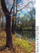 Осенний пейзаж с деревьями и рекой. Стоковое фото, фотограф Павел Ходыревский / Фотобанк Лори