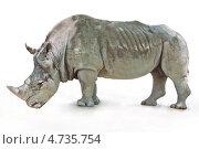 Носорог на белом фоне. Стоковое фото, фотограф Дмитрий Лифанов / Фотобанк Лори