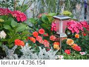 Купить «Красивая клумба с цветами и фонариком», фото № 4736154, снято 6 июня 2013 г. (c) Ольга Липунова / Фотобанк Лори