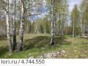 Весенний пейзаж . Березовая роща. Стоковое фото, фотограф Виталий Горелов / Фотобанк Лори
