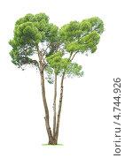 Купить «Дерево на белом фоне», фото № 4744926, снято 16 декабря 2012 г. (c) Кропотов Лев / Фотобанк Лори