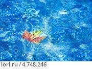 Кленовый лист на воде. Стоковое фото, фотограф Михаил Кокорин / Фотобанк Лори