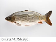 Серебристая рыба на белом фоне. Стоковое фото, фотограф Slava Pozdnyakov / Фотобанк Лори