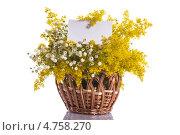 Купить «Букет летних цветов с чистым бланком», фото № 4758270, снято 16 июня 2013 г. (c) Peredniankina / Фотобанк Лори