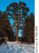 Сибирь  Глубинка. зима.закат. сосна.Одинокое дерево. Стоковое фото, фотограф Александр Тубол / Фотобанк Лори