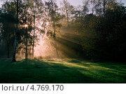 Лесной пейзаж. Стоковое фото, фотограф михаил красильников / Фотобанк Лори