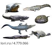Купить «Крокодилы, черепаха и змея», фото № 4779066, снято 17 октября 2018 г. (c) Яков Филимонов / Фотобанк Лори