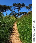 Лесная тропинка, Англия, графство Корнуолл, (Cornwall, UK) (2013 год). Стоковое фото, фотограф Гурова Анна / Фотобанк Лори