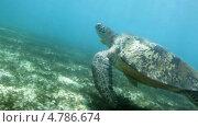 Купить «Морская черепаха», видеоролик № 4786674, снято 22 июня 2013 г. (c) Сергей Новиков / Фотобанк Лори