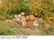 Купить «Осень. Заготовка дров на зиму. Береза, распиленная на дрова», фото № 4787054, снято 20 сентября 2012 г. (c) Елена Ермоленко / Фотобанк Лори
