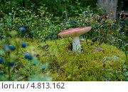 Лесной гриб. Стоковое фото, фотограф Юлия Деденок / Фотобанк Лори