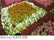 Декоративные цветы. Стоковое фото, фотограф Рустам Гилязутдинов / Фотобанк Лори