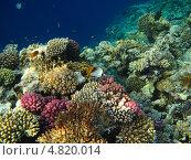 Купить «Красное море», фото № 4820014, снято 12 июня 2013 г. (c) Робул Дмитрий / Фотобанк Лори