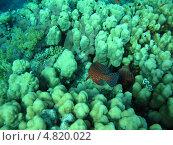 Купить «Рыбки красного моря», фото № 4820022, снято 12 июня 2013 г. (c) Робул Дмитрий / Фотобанк Лори