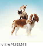Купить «Дрессированные домашние животные делают пирамиду», фото № 4823518, снято 23 марта 2019 г. (c) Sergey Nivens / Фотобанк Лори