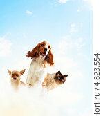 Купить «Две домашние породистые собаки и толстый кот на фоне неба», фото № 4823554, снято 23 марта 2019 г. (c) Sergey Nivens / Фотобанк Лори