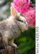 Милый кролик, сидящий на пне. Стоковое фото, фотограф Digifuture / Фотобанк Лори