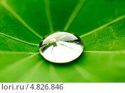 Купить «Капля воды на зеленом листе», фото № 4826846, снято 13 июня 2013 г. (c) Иван Михайлов / Фотобанк Лори