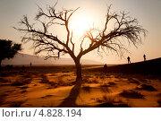 Купить «Вид на песчаную дюну в национальном парке Намиб-Науклуфт, Намибия, Южная Африка», фото № 4828194, снято 19 июня 2013 г. (c) Николай Винокуров / Фотобанк Лори