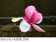 Цветок. Стоковое фото, фотограф Камиля Сайдашева / Фотобанк Лори