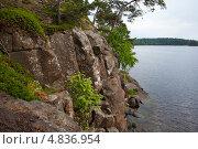 Купить «Сосны на скалах. Остров Валаам», фото № 4836954, снято 9 июня 2013 г. (c) Igor Lijashkov / Фотобанк Лори