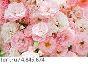Купить «Нежно розовые цветки роз, фон», фото № 4845674, снято 1 июля 2013 г. (c) Екатерина Овсянникова / Фотобанк Лори