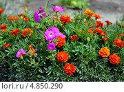 Цветы у дома. Стоковое фото, фотограф Анатолий Уткин / Фотобанк Лори