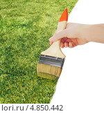 Купить «Рука с малярной кистью рисует траву», фото № 4850442, снято 28 мая 2013 г. (c) Олег Родионов / Фотобанк Лори