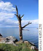 Байкал. Мертвое дерево с лестницей. Стоковое фото, фотограф Евгений Осадчий / Фотобанк Лори