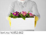 Купить «Большой горшок с цветами в мужских руках», фото № 4852662, снято 6 марта 2013 г. (c) Syda Productions / Фотобанк Лори