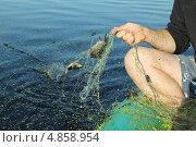 Браконьерство. Вытягивание сети с рыбой. Стоковое фото, фотограф Геннадий чупругин / Фотобанк Лори