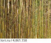 Бамбук. Стоковое фото, фотограф Александр Солдатенко / Фотобанк Лори
