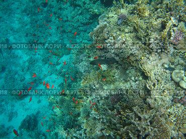 Купить «Мурена среди кораллов», фото № 4875318, снято 12 июня 2013 г. (c) Робул Дмитрий / Фотобанк Лори