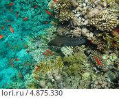 Купить «Мурена среди обитателей Красного моря», фото № 4875330, снято 12 июня 2013 г. (c) Робул Дмитрий / Фотобанк Лори