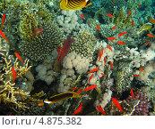 Купить «Множество коралловых рыбок», фото № 4875382, снято 12 июня 2013 г. (c) Робул Дмитрий / Фотобанк Лори