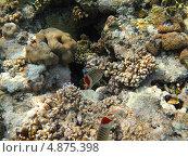 Купить «Коралловые рыбки», фото № 4875398, снято 13 июня 2013 г. (c) Робул Дмитрий / Фотобанк Лори