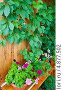 Купить «Цветы на балконе», фото № 4877502, снято 20 июля 2013 г. (c) Екатерина Овсянникова / Фотобанк Лори