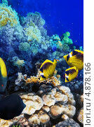 Купить «Кораллы и желтые рыбы в Красном море. Египет», фото № 4878166, снято 8 сентября 2012 г. (c) Vitas / Фотобанк Лори