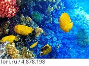 Купить «Кораллы и разноцветные рыбы в Красном море», фото № 4878198, снято 8 сентября 2012 г. (c) Vitas / Фотобанк Лори