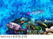 Купить «Кораллы и рыбы в Красном море. Египет, Африка», фото № 4878218, снято 4 сентября 2012 г. (c) Vitas / Фотобанк Лори