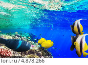 Купить «Кораллы и рыбы в Красном море. Египет, Африка», фото № 4878266, снято 3 сентября 2012 г. (c) Vitas / Фотобанк Лори