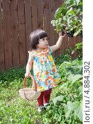 Купить «Сбор ягод», фото № 4884302, снято 18 июля 2013 г. (c) Бондаренко Олеся / Фотобанк Лори