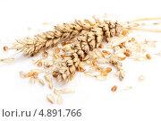 Купить «Колосья пшеницы на белом фоне», фото № 4891766, снято 15 июля 2013 г. (c) Алексей Букреев / Фотобанк Лори