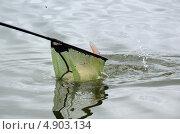 Купить «Подсачек с рыбой. Рыбалка», фото № 4903134, снято 29 июня 2013 г. (c) Наталия Евмененко / Фотобанк Лори