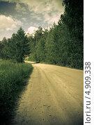 Дорога в лесу. Стоковое фото, фотограф Петренко Иван / Фотобанк Лори