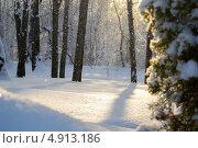 Лёгкий снегопад в лесу в лучах солнца. Стоковое фото, фотограф Дмитрий Дорошин / Фотобанк Лори